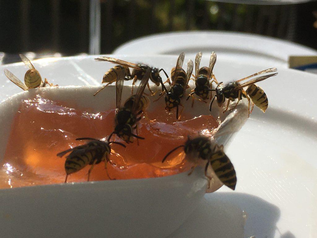 Ansammlung Wespen Konfitüre Frühstück Lebensmittel